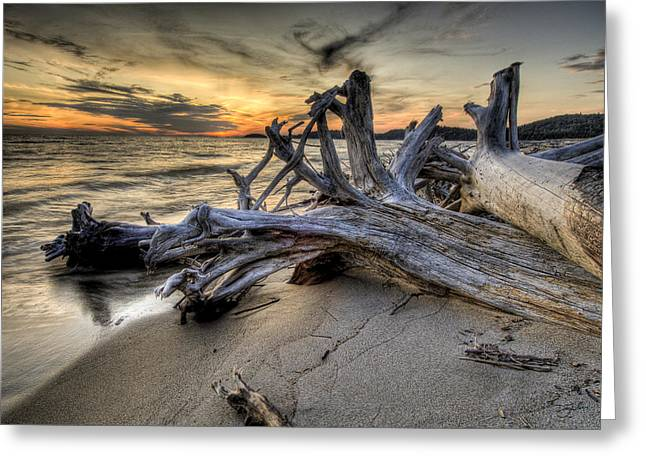 Greeting Card featuring the photograph Pic Driftwood by Doug Gibbons