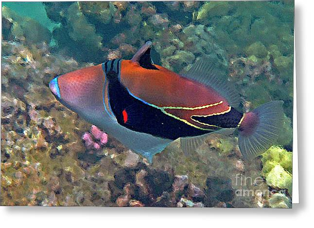 Picasso Triggerfish Up Close Greeting Card