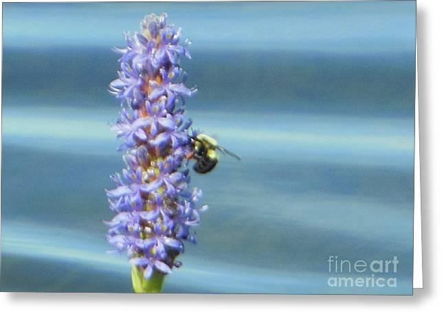 Pickerelweed Bumble Bee Greeting Card