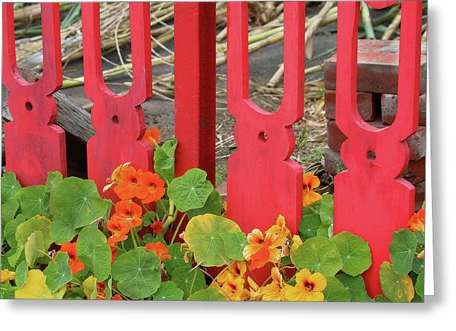 Picket Fence And Nasturtiums Greeting Card by Art Block Collections