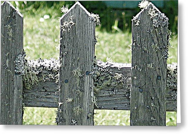 Picket Fence Greeting Card by Mg Blackstock