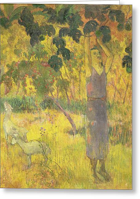 Picking Fruit From A Tree Greeting Card by Paul Gauguin