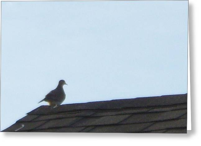 Picture Of A Pigeon Greeting Card