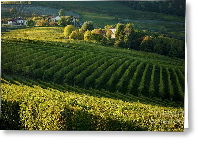 Piemonte Vineyard II Greeting Card
