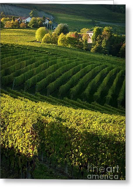 Piemonte Vineyard IIi Greeting Card by Brian Jannsen