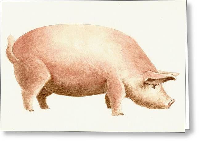 Pig Greeting Card by Michael Vigliotti