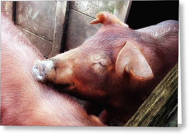 Pig Pals Greeting Card by Ross Powell