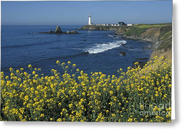Pigeon Point Panorama Greeting Card by Stan and Anne Foster
