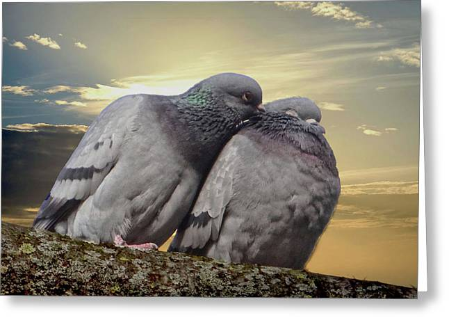 Pigeons In Love, Smooching On A Branch At Sunset Greeting Card