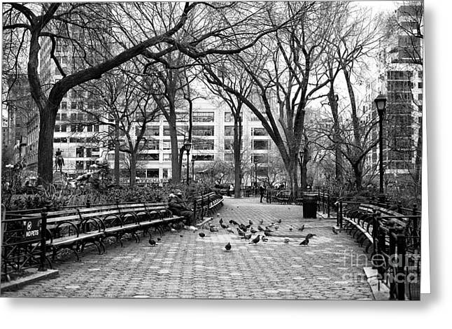 Pigeons In Union Square Park Greeting Card by John Rizzuto
