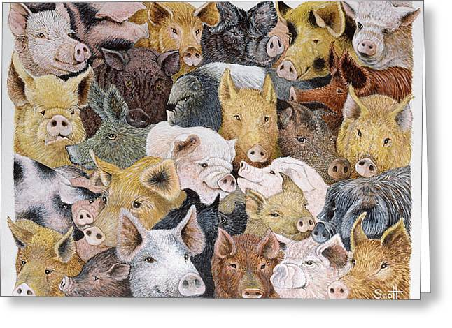 Pig Greeting Cards - Pigs Galore Greeting Card by Pat Scott