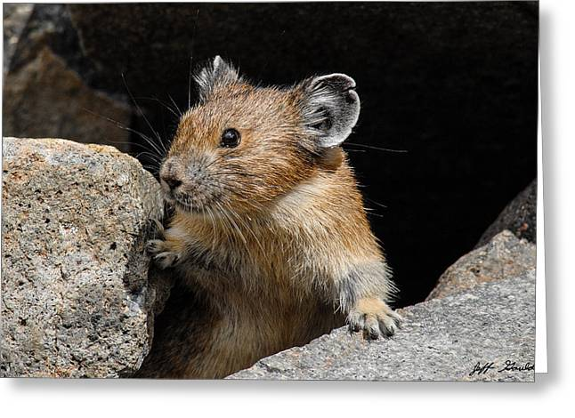 Pika Looking Out From Its Burrow Greeting Card