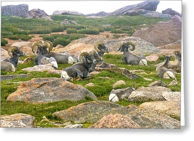 Pikes Peak Rams Greeting Card