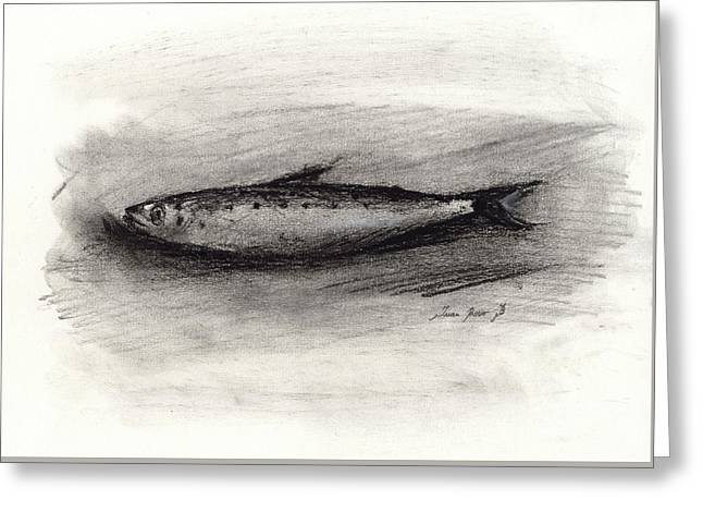 Pilchard Drawing Greeting Card
