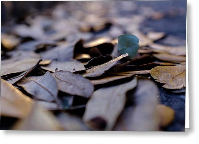 Pile Of Leaves At Dusk In Savannah Georgia Greeting Card