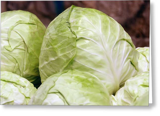 Pile Of Ripe Cabbage Greeting Card