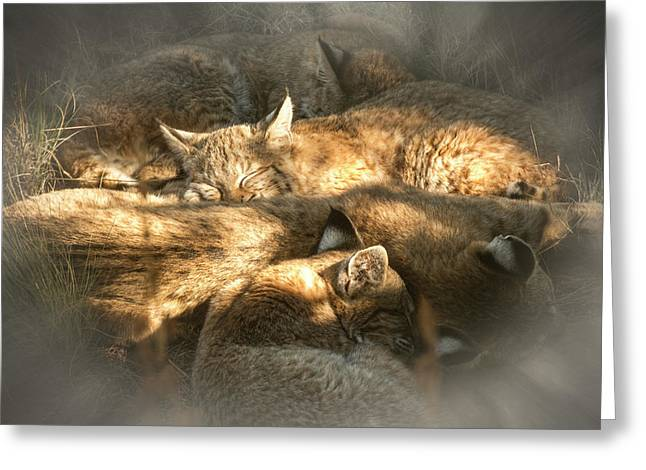 Greeting Card featuring the photograph Pile Of Sleeping Bobcats by Mary Lee Dereske