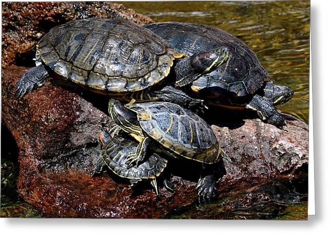 Pile Of Sliders - Turtles Greeting Card