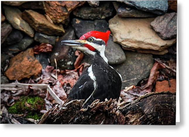 Pileated Pete Greeting Card