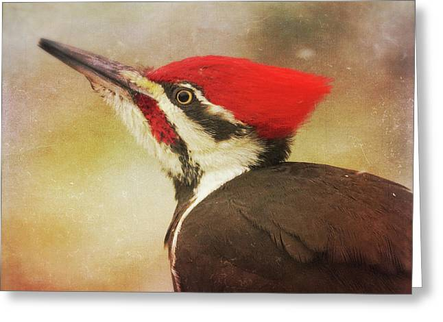 Greeting Card featuring the photograph Pileated Woodpecker With Snowfall by Heidi Hermes