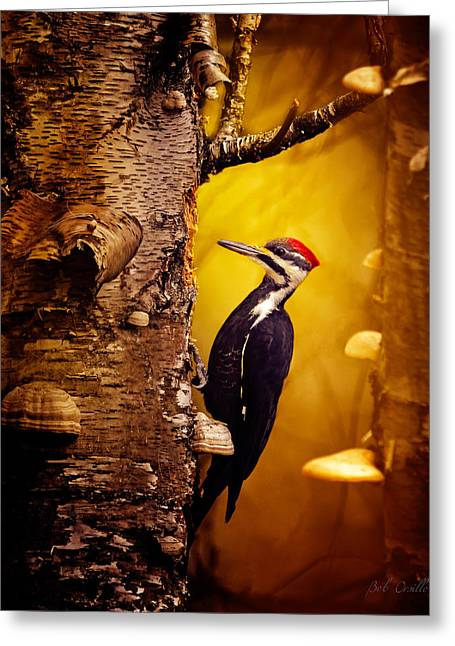 Pileated Woodpecker Forest Sunrise Greeting Card by Bob Orsillo