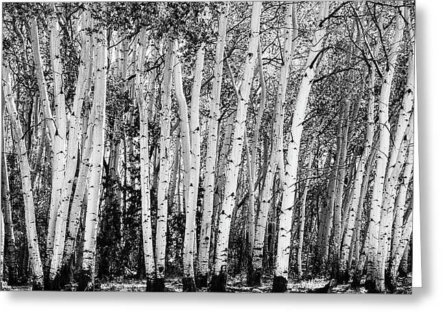 Pillars Of The Wilderness Greeting Card by James BO Insogna