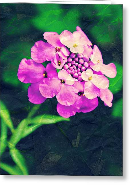 Pincushion Flower Greeting Card by Cathie Tyler