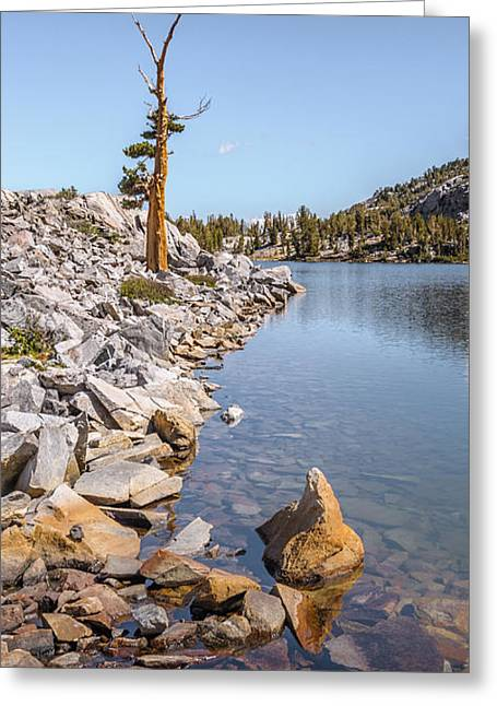 Greeting Card featuring the photograph Pine And Rock by Alexander Kunz