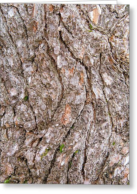 Greeting Card featuring the photograph Pine Bark Abstract by Christina Rollo