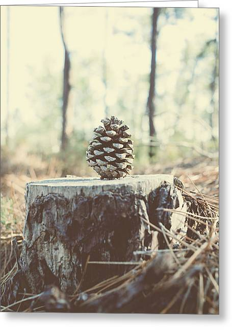 Pine Cone Greeting Card by Marco Oliveira