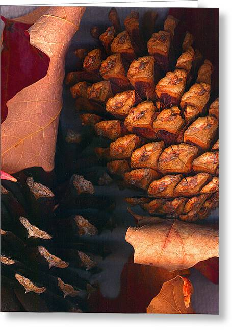 Pine Cones And Leaves Greeting Card by Nancy Mueller