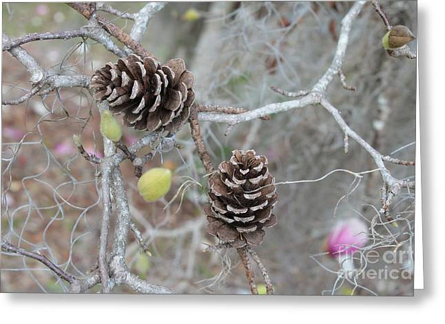 Pine Cones In Gray Greeting Card by Carol Groenen