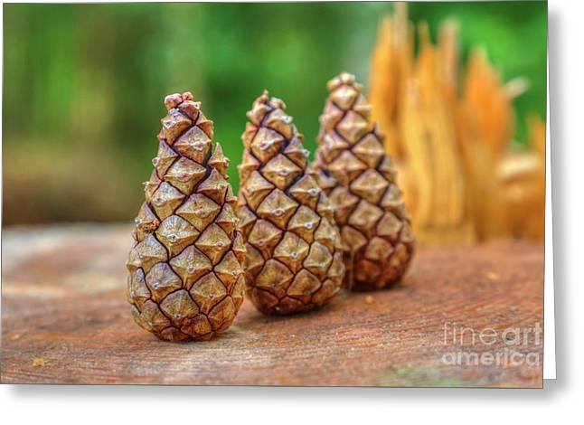 Pine Cones Greeting Card by Veikko Suikkanen