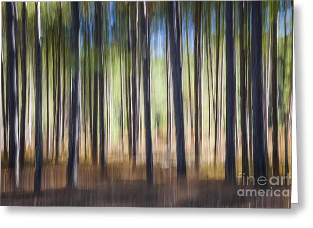 Pine Forest Greeting Card by Elena Elisseeva