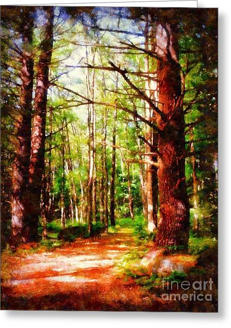 Pine Forest Path Greeting Card