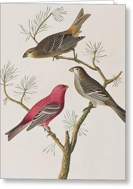 Pine Grosbeak Greeting Card by John James Audubon