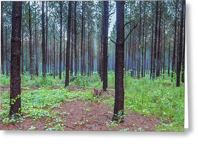 Greeting Card featuring the photograph Pine Grove And Fog In Charlotte Nc Panorama by Ranjay Mitra