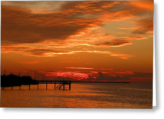 Pine Island Sunset Greeting Card by Rosalie Scanlon