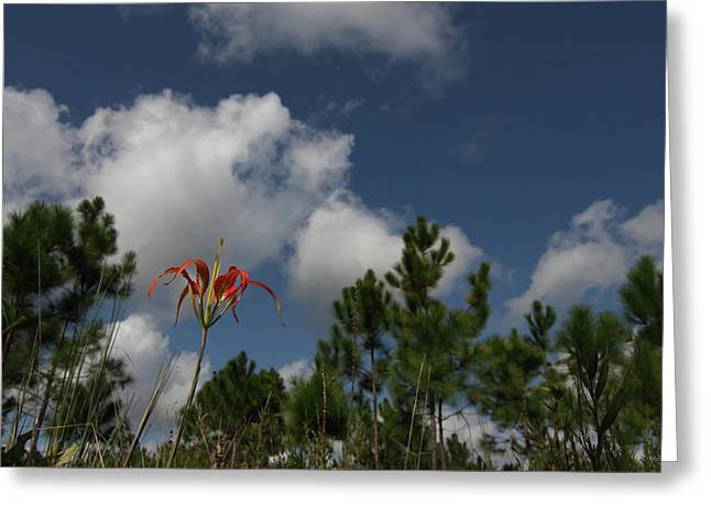 Pine Lily And Pines Greeting Card