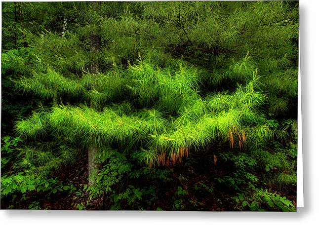 Pine Greeting Card by Mike Eingle