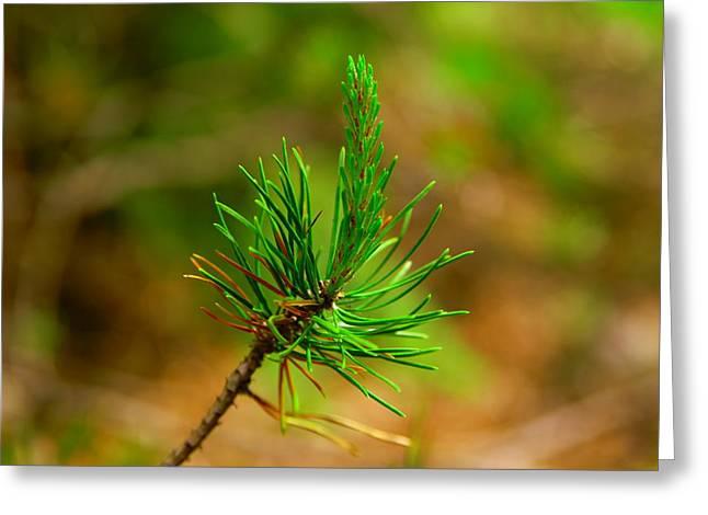 Pine Needle Greeting Card