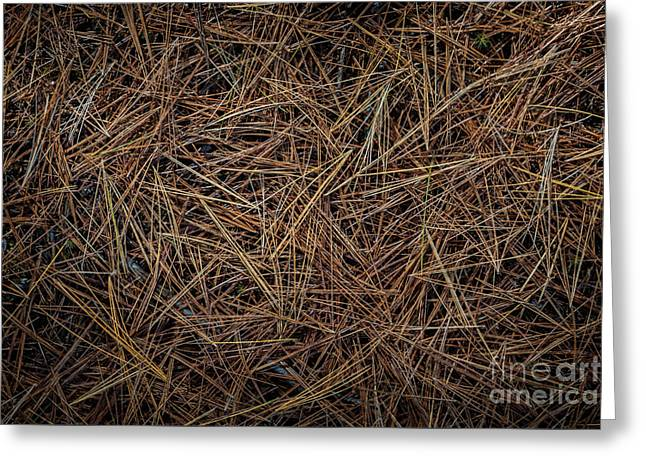 Pine Needles On Forest Floor Greeting Card by Elena Elisseeva
