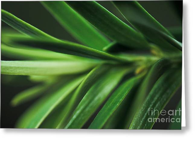 Pine Needles Greeting Card by Ryan Kelly