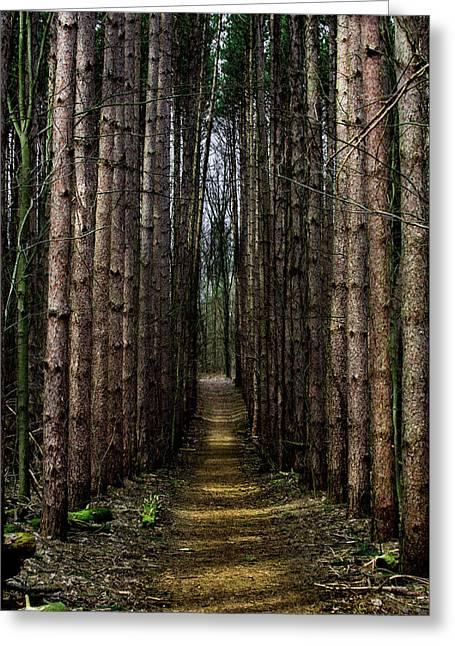 Pine Path  Greeting Card