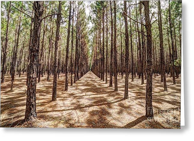 Pine Plantation Wide Color Greeting Card