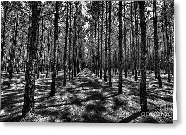 Pine Plantation Wide Greeting Card