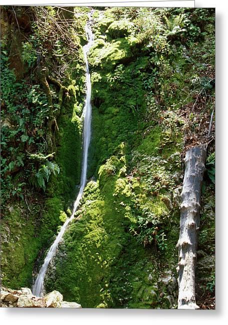 Pine Ridge Trail - Ventana Wilderness Greeting Card