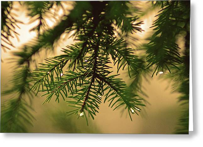 Greeting Card featuring the photograph Pine by Robert Geary