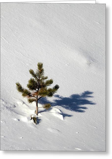 Pine Shadow Greeting Card
