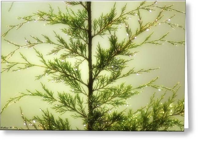 Greeting Card featuring the photograph Pine Shower by Brian Wallace